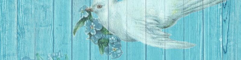 dove-1861791_1920